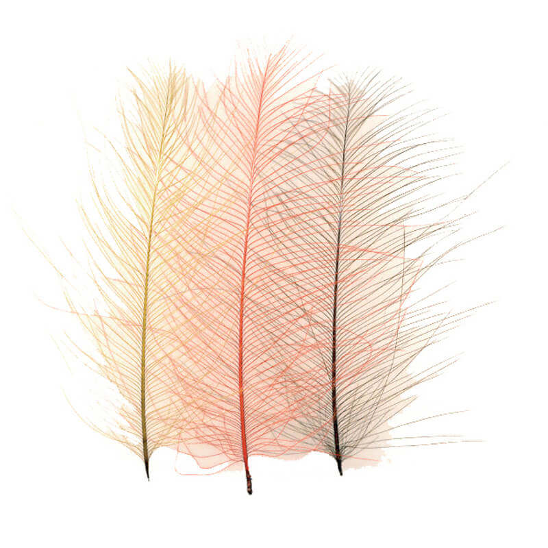 Petitjean CDC Feathers